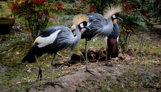Zoo Touro Parc-58 (1024x585)